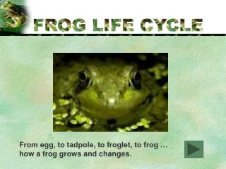 From egg, to tadpole, to froglet, to frog …  how a frog grows and changes.
