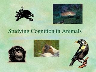 Studying Cognition in Animals