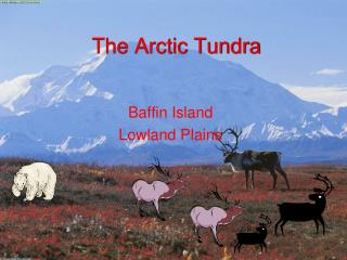The Arctic Tundra