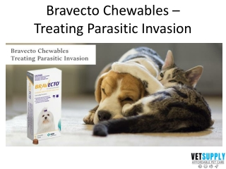 Bravecto Chewables - Parasitic Treatment   Pet Care   Pet Supplies   VetSupply
