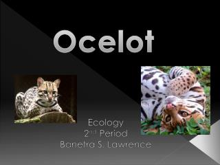 Ecology 2 nd  Period Banetra S. Lawrence