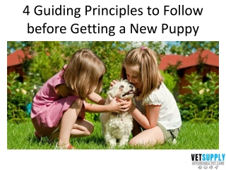 4 Guiding Principles to Follow before Getting a New Puppy   Puppy Supplies   Vet