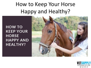 How to keep your horse happy and healthy   Horse Supplies   VetSupply