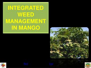 INTEGRATED WEED MANAGEMENT IN MANGO