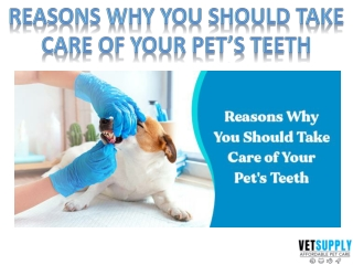 Reasons why you should take care of you pet's teeth   Pet Dental Care  VetSupply
