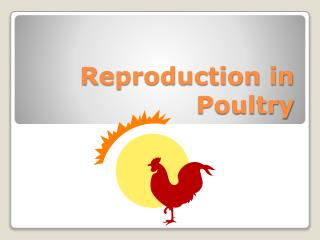 Reproduction in Poultry