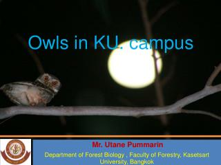 Owls in KU. campus