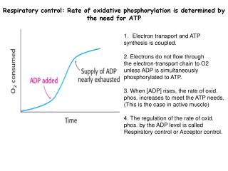 Respiratory control : Rate of oxidative phosphorylation is determined by the need for ATP