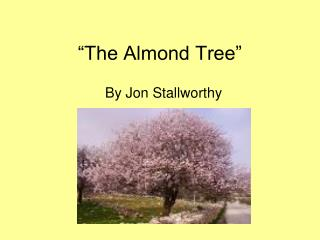 """The Almond Tree"""