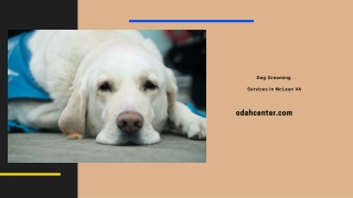 Dog Grooming  Services in McLean VA