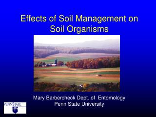 Effects of Soil Management on  Soil Organisms