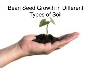 Bean Seed Growth in Different Types of Soil