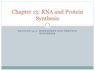 Chapter 13: RNA and Protein Synthesis