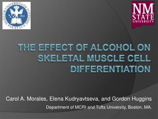 The Effect of Alcohol on Skeletal Muscle Cell Differentiation