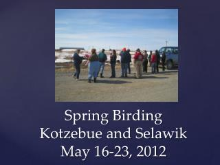 Spring Birding Kotzebue and  Selawik May 16-23, 2012