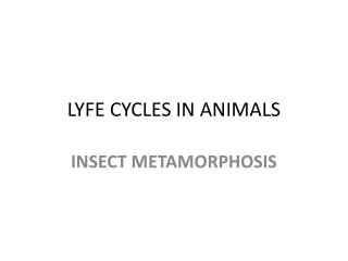 LYFE CYCLES IN ANIMALS