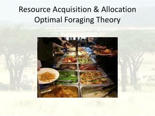 Resource Acquisition & Allocation Optimal Foraging Theory