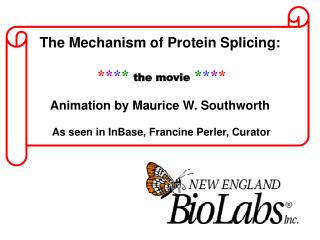 The Mechanism of Protein Splicing: * * * * the movie * * * * Animation by Maurice W. Southworth As seen in InBase, Fran