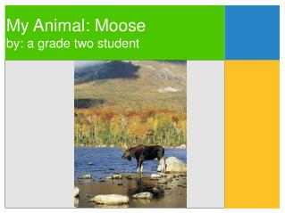 My Animal: Moose by: a grade two student