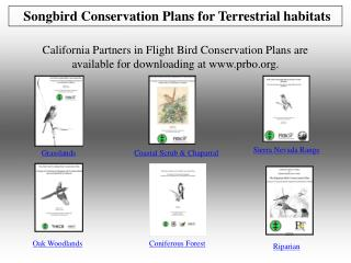 Songbird Conservation Plans for Terrestrial habitats