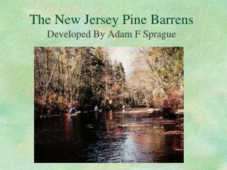 The New Jersey Pine Barrens