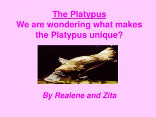 The Platypus  We are wondering what makes the Platypus unique?