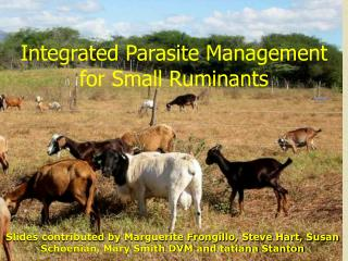 Integrated Parasite Management  for Small Ruminants