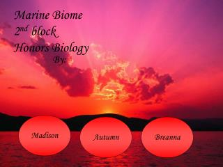 Marine Biome 2 nd  block Honors Biology