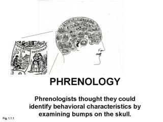 Phineas Gage Brain damage caused profound psychological changes.