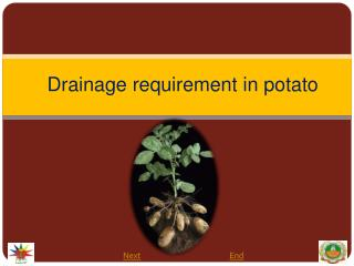 Drainage requirement in potato