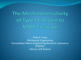 The Mechanosensitivity of Type I Collagen to MMP Cleavage