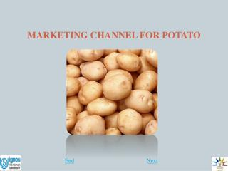 MARKETING CHANNEL FOR POTATO