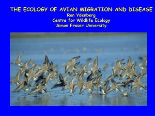 THE ECOLOGY OF AVIAN MIGRATION AND DISEASE Ron Ydenberg Centre for Wildlife Ecology Simon Fraser University
