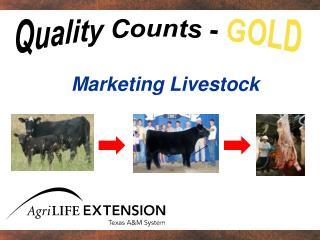 Marketing Livestock