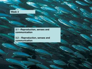 3.1 –Reproduction, senses and communication 3.2 – Reproduction, senses and communication