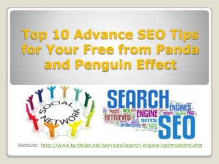 Top 10 Advance SEO Tips for Your Free from Panda and Penguin