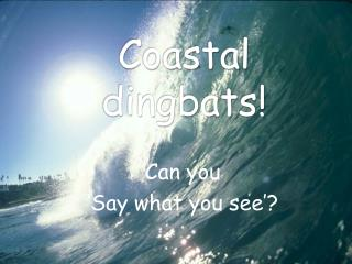 Coastal dingbats!