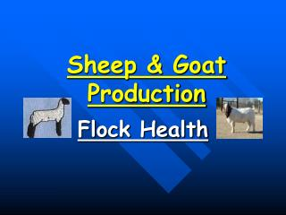 Sheep & Goat Production