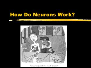 How Do Neurons Work?