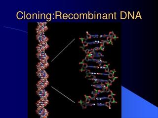 Cloning:Recombinant DNA