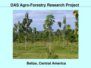 OAS Agro-Forestry Research Project