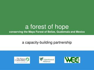 a forest of hope conserving the Maya Forest of Belize, Guatemala and Mexico