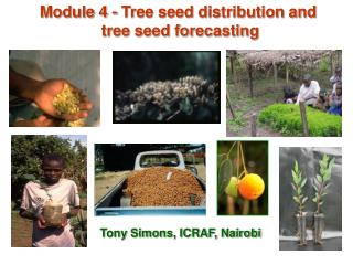 Module 4 - Tree seed distribution and  tree seed forecasting