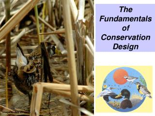 The Fundamentals  of Conservation Design