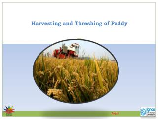Harvesting and Threshing of Paddy