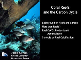 Coral Reefs and the Carbon Cycle