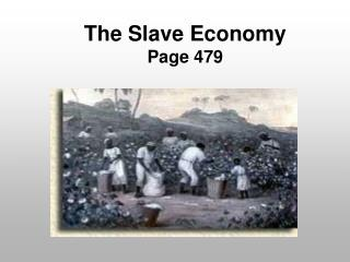 The Slave Economy Page 479