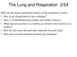 The Lung and Respiration  2/24