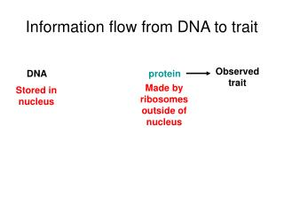 Information flow from DNA to trait