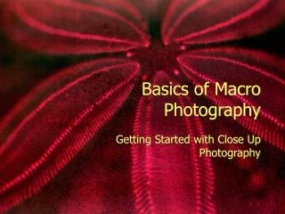 Basics of Macro Photography